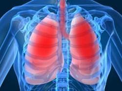 pluća i grudni koš