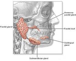 Infekcije žlijezda slinovnica