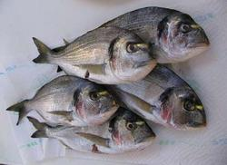 ribe - izvor b6 vitamina